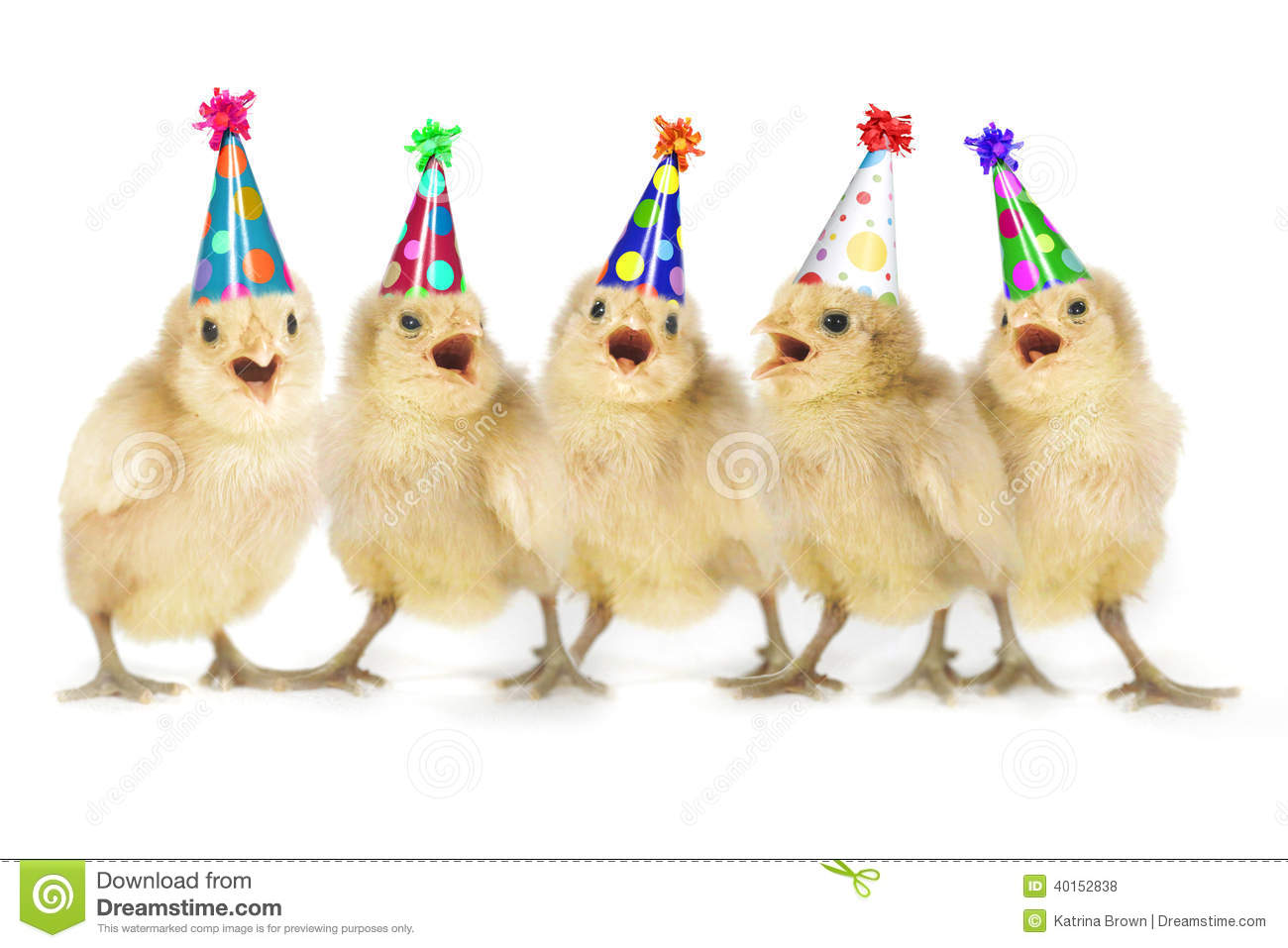 happy birthday chicken images ; yellow-baby-chicks-singing-happy-birthday-lined-up-40152838