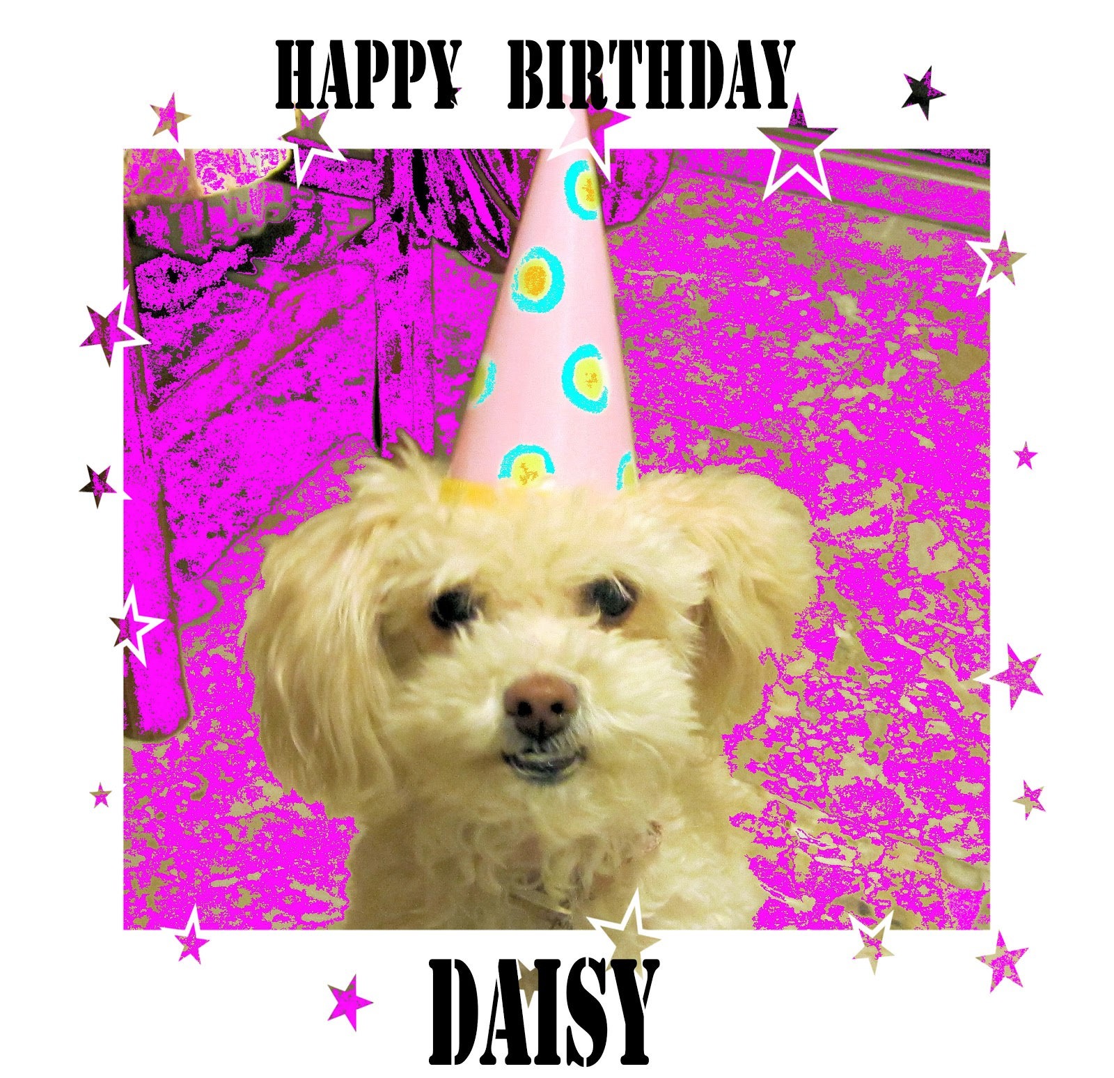 happy birthday daisy ; daisy+2013