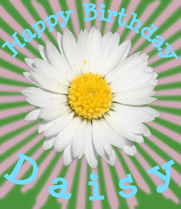 happy birthday daisy ; happy+birthday+daisy