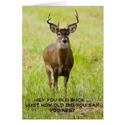 happy birthday deer hunter images ; hunting_funny_whitetail_buck_animal_happy_birthday_card-rbb5ac26f639242c6a381e584a95a1206_xvuai_8byvr_400