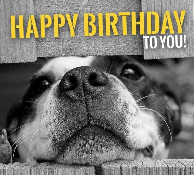 happy birthday dog pictures ; 259faaf5799ed45be4ae4b338e4c05a3-min