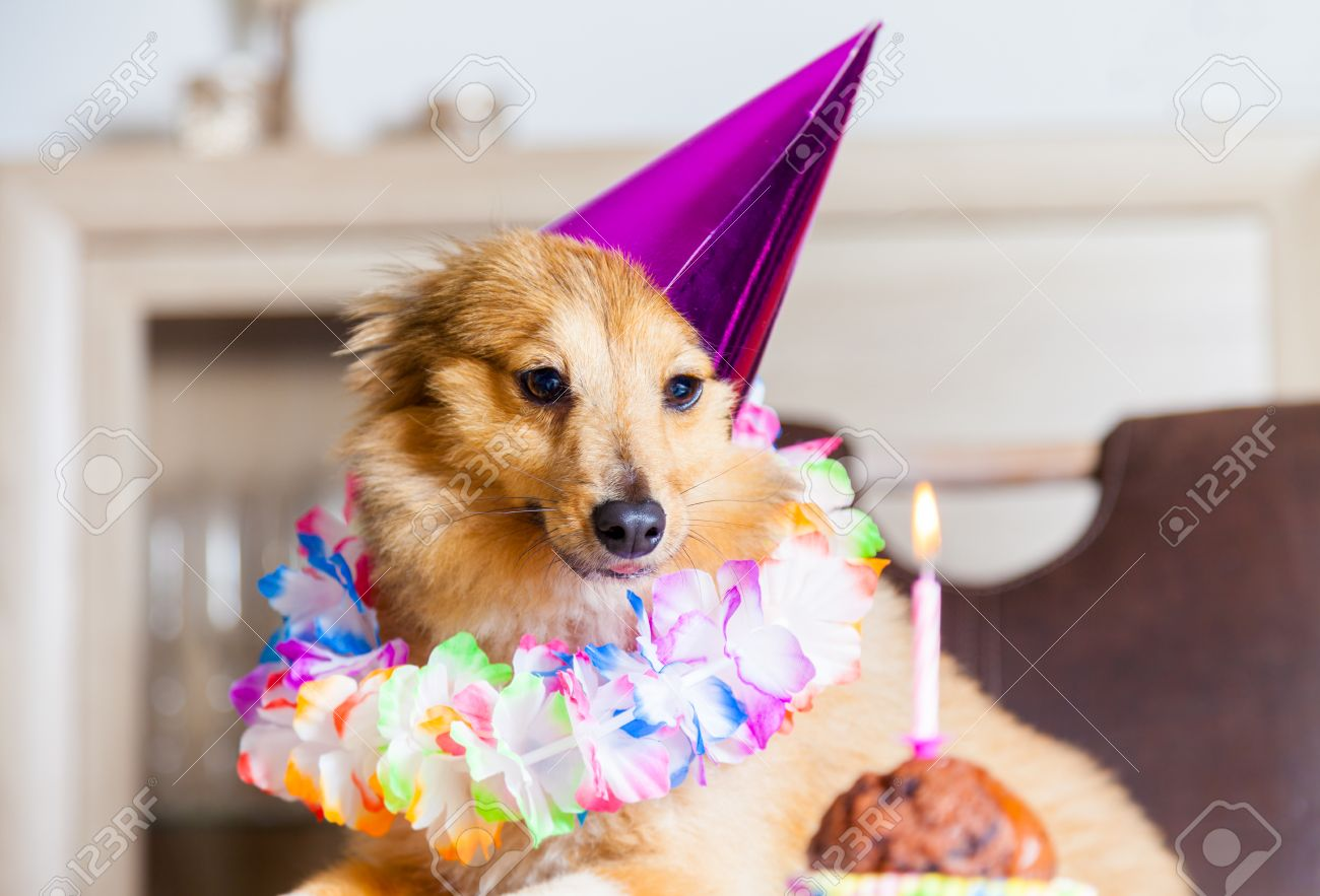 happy birthday dog pictures ; 63358812-happy-birthday-dog-looks-to-candle
