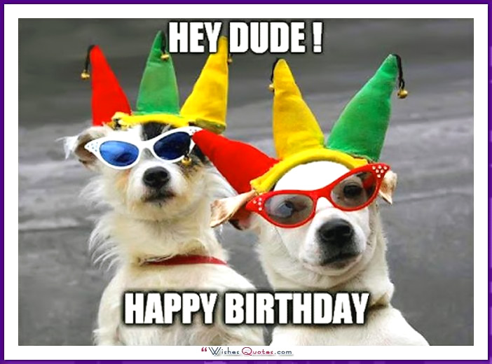 happy birthday dog pictures ; Birthday_Memes_Dogs_Funny_14