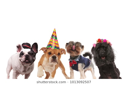 happy birthday dog pictures ; four-cute-little-dogs-ready-260nw-1013092507