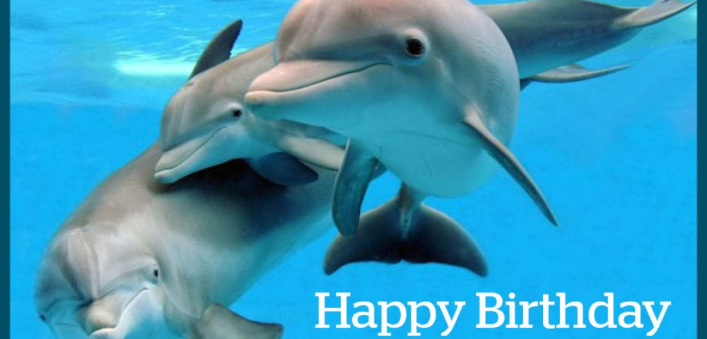 happy birthday dolphin ; 141027_AwesomeOcean_Dolphins-1-1000x480