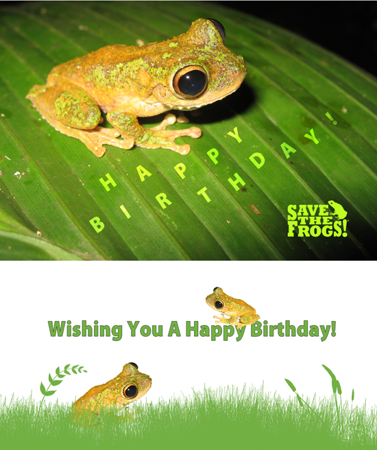 happy birthday frog ; Birthday-Litoria-eucnemis-all-in-one-550