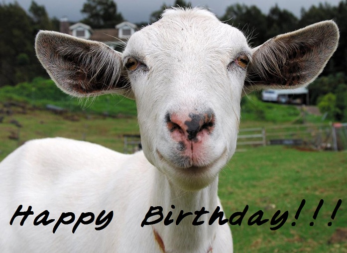 happy birthday goat meme ; 741744c88994ab478c9bf40140713a6c