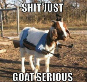 happy birthday goat meme ; Funny-Goat-Meme-Shit-Just-Goat-Serious-Image-min-300x284