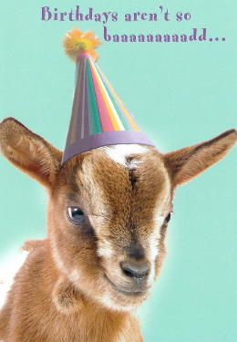 happy birthday goat meme ; b8ea91340187dd2fc00060e94575b2c5
