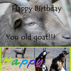 happy birthday goat meme ; happy-birthday-bakoahmed-bleak-bleak-baa-you-old-goat_fb_4748599