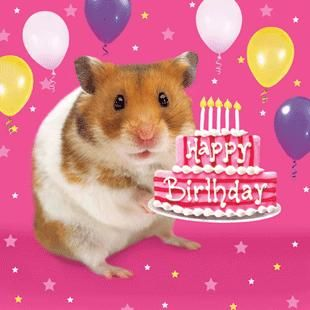 happy birthday hamster ; 1fd23455bfb7782374d8a0572f1709a1