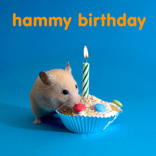 happy birthday hamster ; 4452412286_c33a0a6c07
