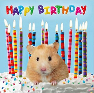 happy birthday hamster ; 4b26cd4c6dfe197b5e3d0ba971f5f50f