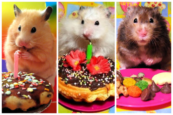 happy birthday hamster ; 62f4229e