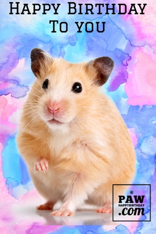 happy birthday hamster ; blogger-image-513161407