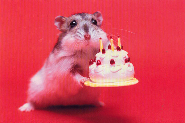 happy birthday hamster ; hammiecake-2266