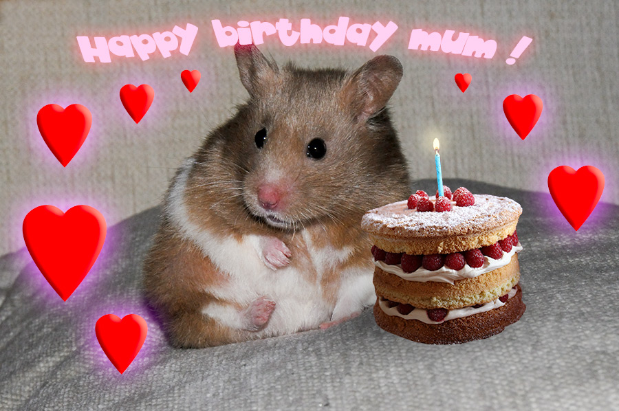 happy birthday hamster ; happy-birthday-mum