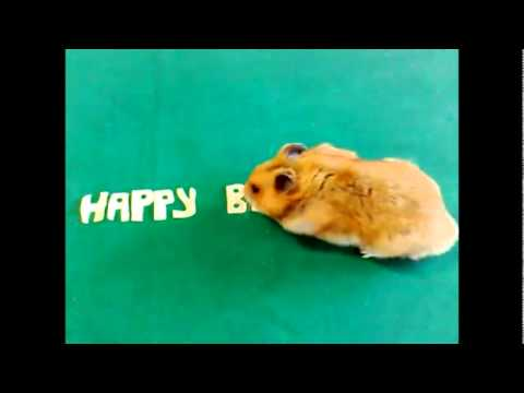 happy birthday hamster ; hqdefault