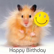 happy birthday hamster ; images-1