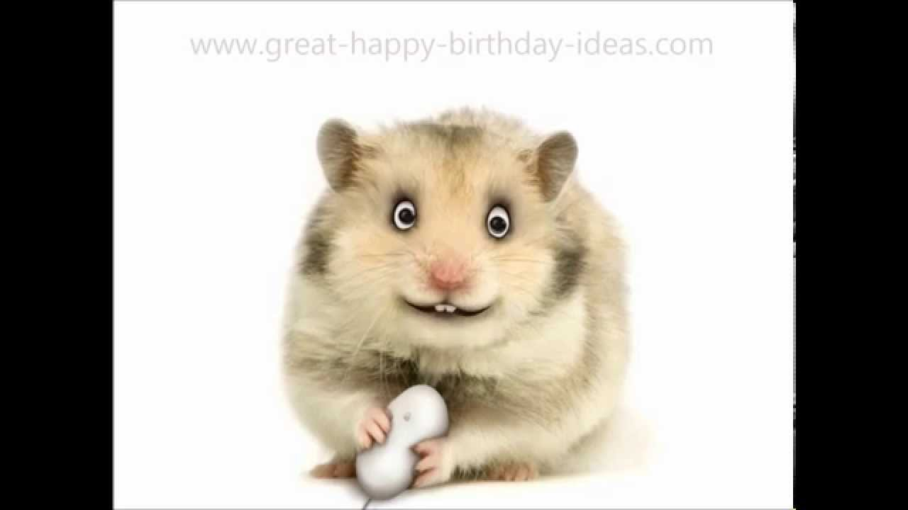 happy birthday hamster ; maxresdefault