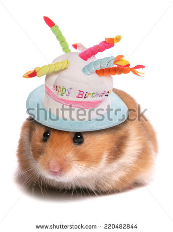 happy birthday hamster ; stock-photo-syrian-hamster-happy-birthday-220482844