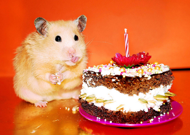happy birthday hamster ; tumblr_m8f5pvD3zH1r6javho1_1280