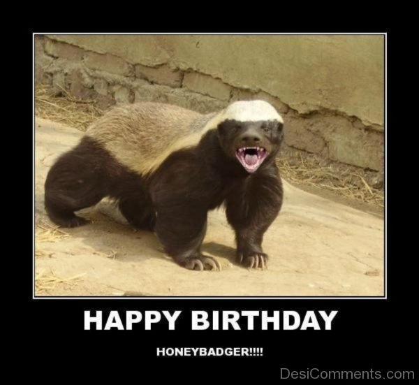 happy birthday honey badger ; Happy-Birthday-Honeybadger-600x551
