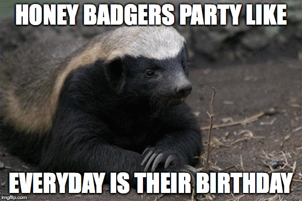 happy birthday honey badger ; py6bd