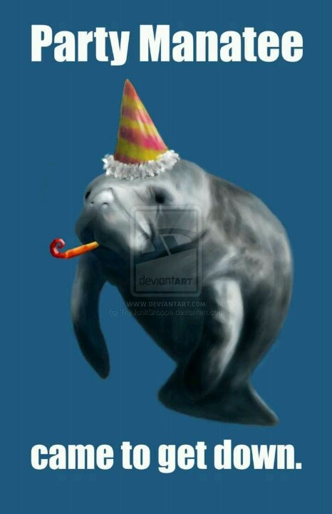 happy birthday manatee ; 26c77a99e2b6b117e6fe0fb5e22712da--manatees-to-get