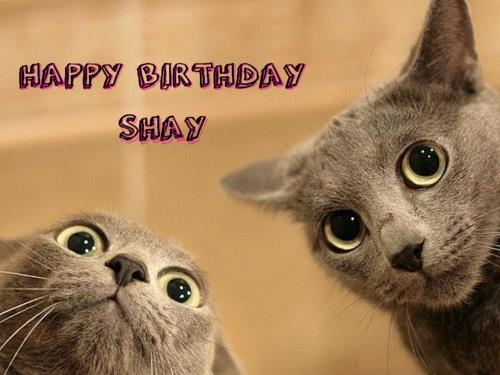 happy birthday shay ; tumblr_inline_n1at2tln7r1qdz4cd