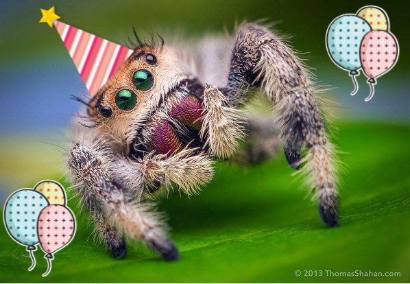 happy birthday spider ; Cg5LnF3WgAEnP5a