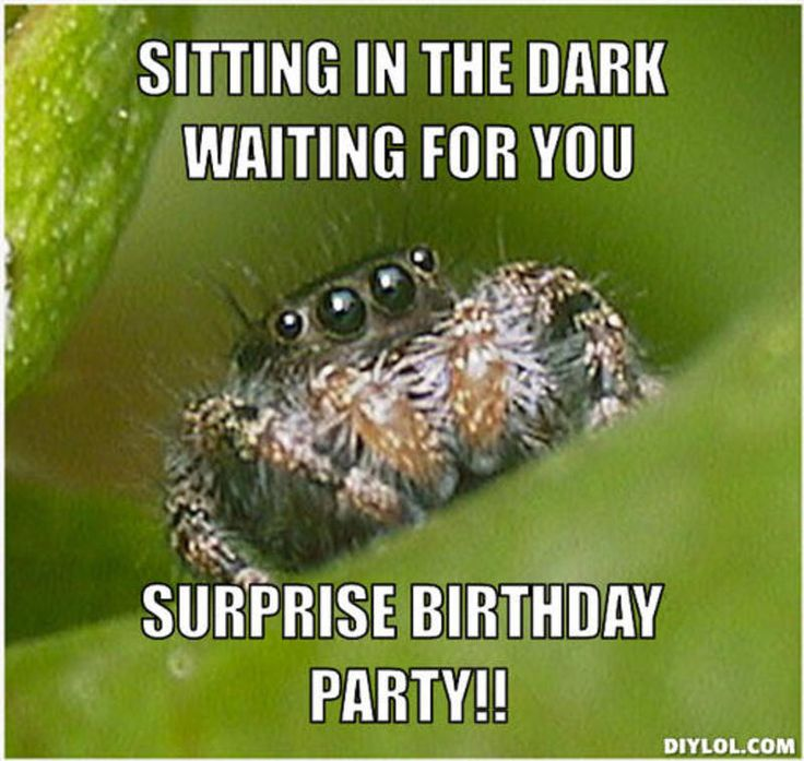 happy birthday spider ; b580fbc5015a07336caf8542c123af32--house-spider-spider-meme