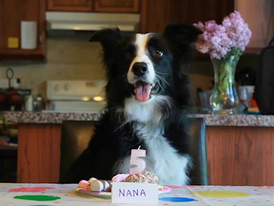nana the border collie birthday ; img330