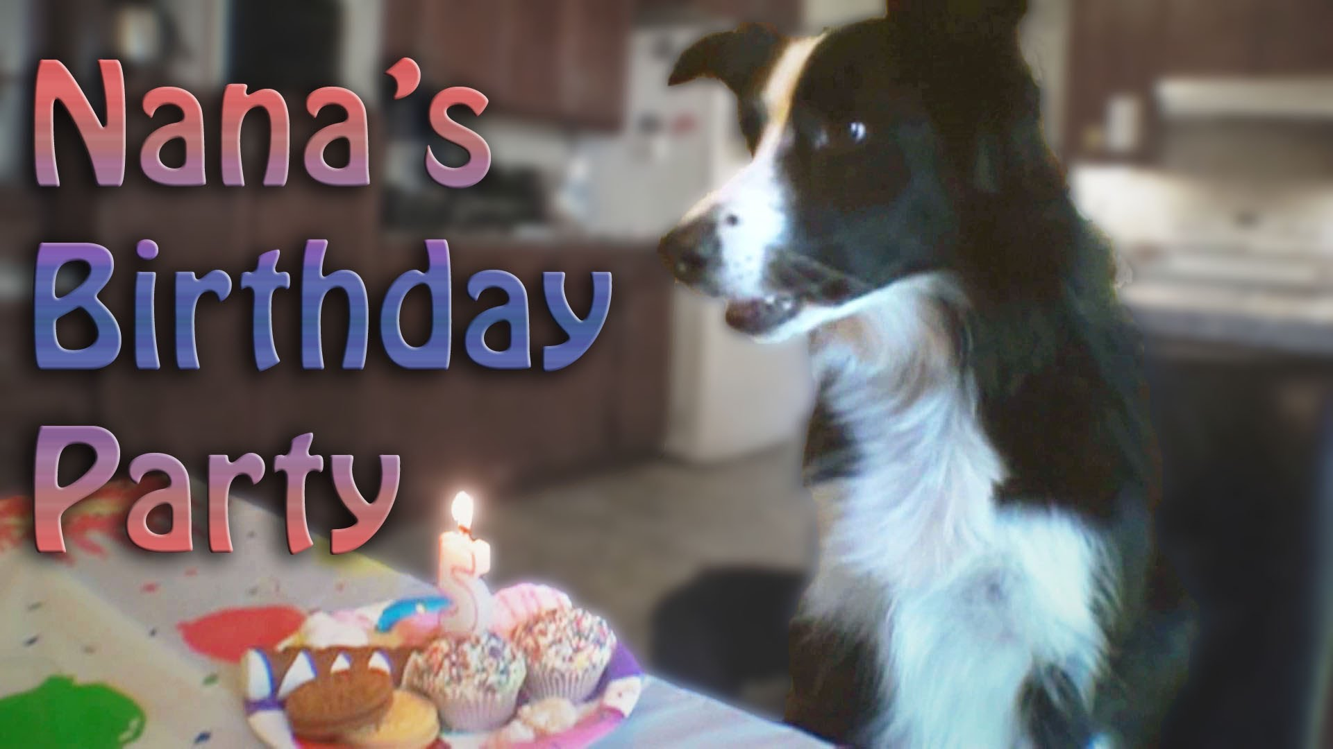 nana the border collie birthday ; maxresdefault