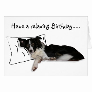 on the border birthday deal ; border-collie-birthday-card-unique-funny-border-collie-greeting-cards-of-border-collie-birthday-card