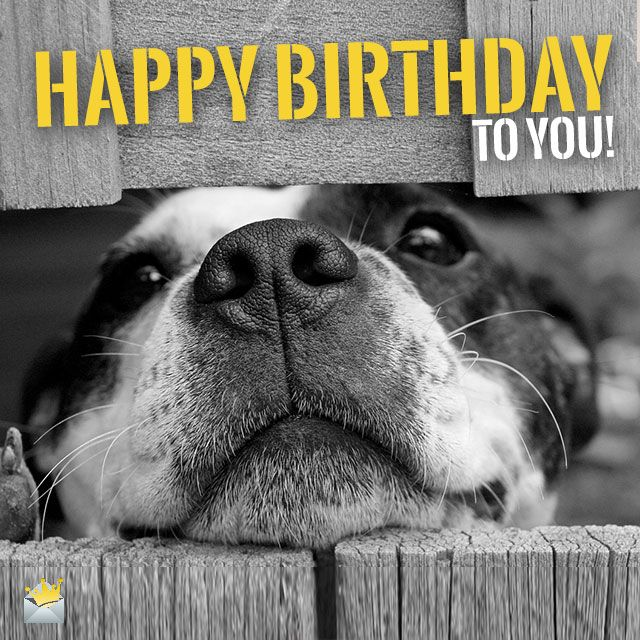 picture of a dog saying happy birthday ; 259faaf5799ed45be4ae4b338e4c05a3