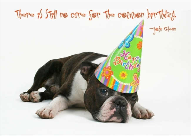 picture of a dog saying happy birthday ; 60c00269c91d3c85d94c9320c9afc0ad