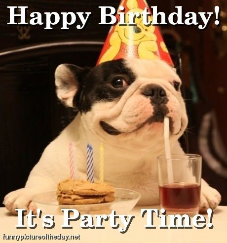 picture of a dog saying happy birthday ; 6416fe144a308afe335e70a2c8645d39--dog-parties-birthday-funnies