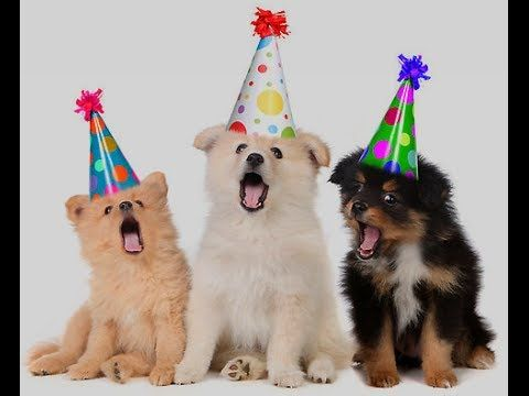 picture of a dog saying happy birthday ; bee4f33c786af50de3ac9cc33f4fb2d7