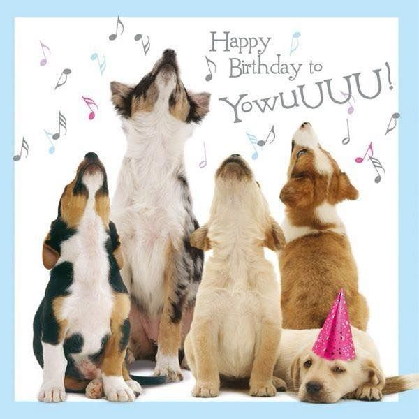 picture of a dog saying happy birthday ; f9c5f9199cafe65cdcc2d7c177378b61