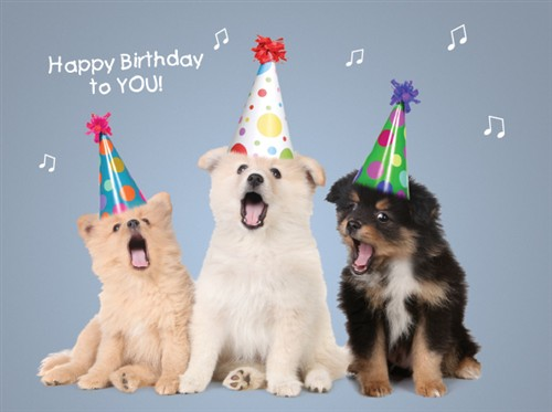 picture of a dog saying happy birthday ; funny-dogs-singing-happy-birthday_2_1