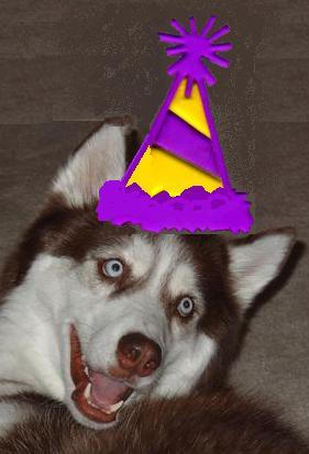 put a birthday hat on a picture ; Indy%2520party%2520hat