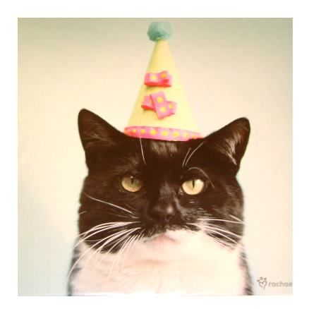 put birthday hat on picture ; 324a33da8f3a5e64a42dc1aa45352754
