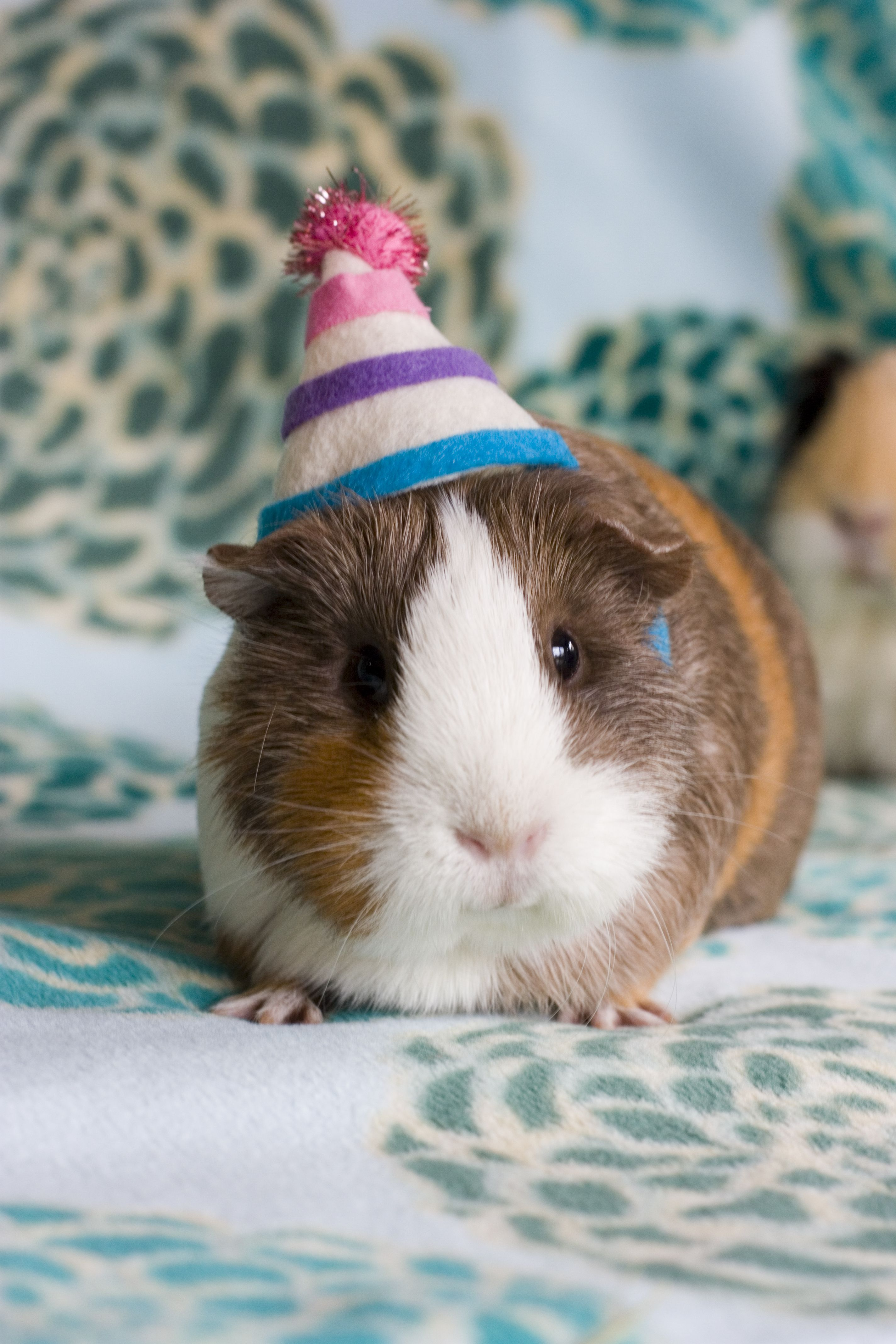 put birthday hat on picture ; 3949b30bfc40baa67154423ea1848bf9