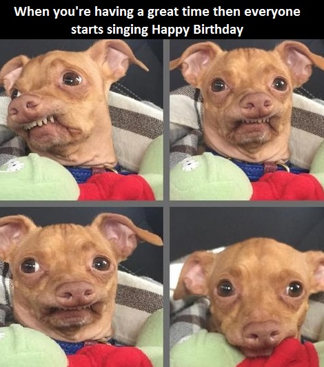 awkward happy birthday ; dog-happy-birthday-song-awkwar-1