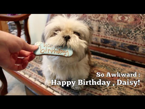awkward happy birthday ; hqdefault