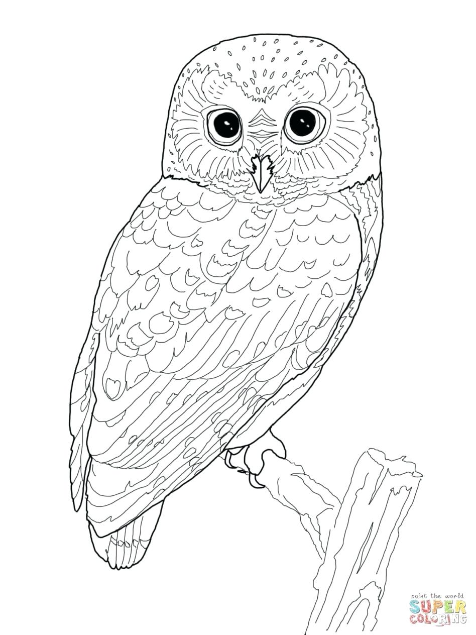 birthday owl coloring pages ; edge-snowy-owl-coloring-page-high-tech-pictures-to-print-pages-birthday-color