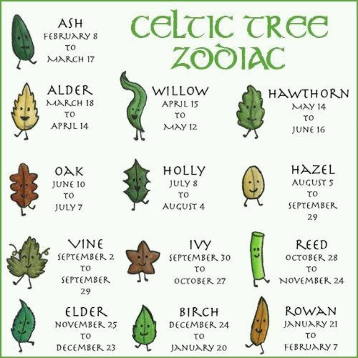 birthday tree sign ; a4fbf4e404f39b5ae018d61d3c909da1--celtic-astrology-astrology-signs
