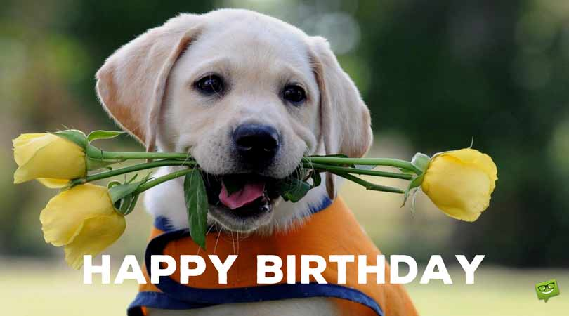 cute birthday pics ; Birthday-message-on-cute-picture-of-dog-3