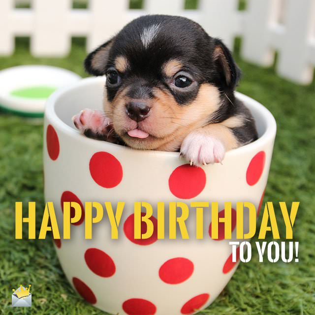 cute happy birthday pictures ; Happy-Birthday-to-you-Cute-dog-chihuahua